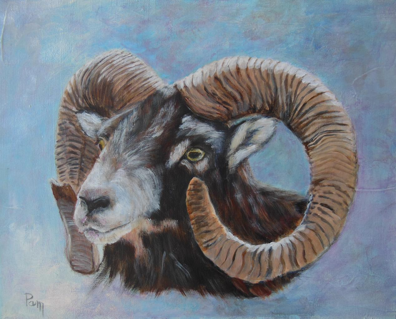 Mouflon 33x41 acrylique